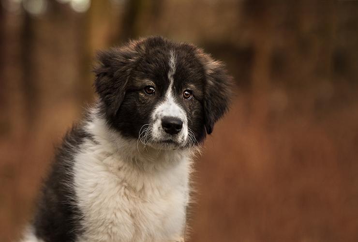 Neija | Hundefotografin | Zetel | Friesland | Fotografin