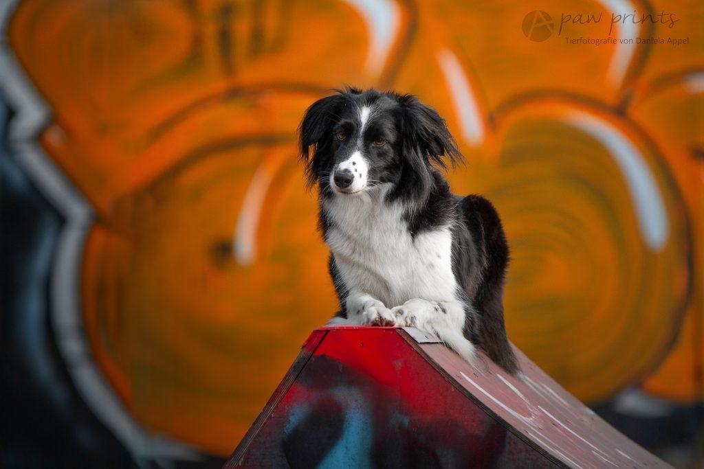 Mathilda | Fotograf in Zetel | Hundefotografin