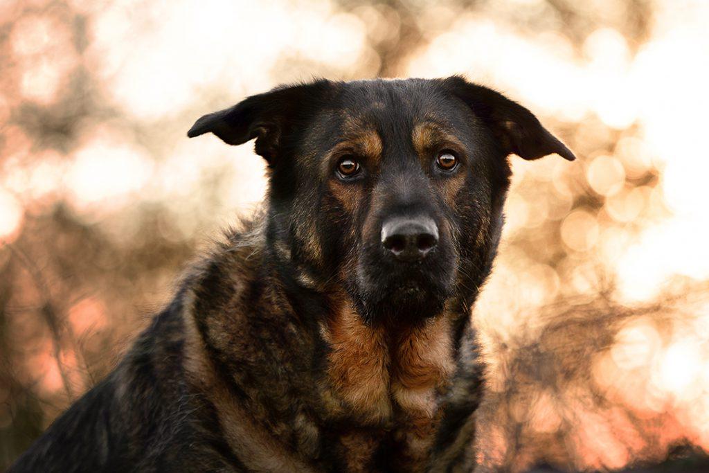 Hundefotografie in Zetel, Friesland und Umzu, paw-prints.de