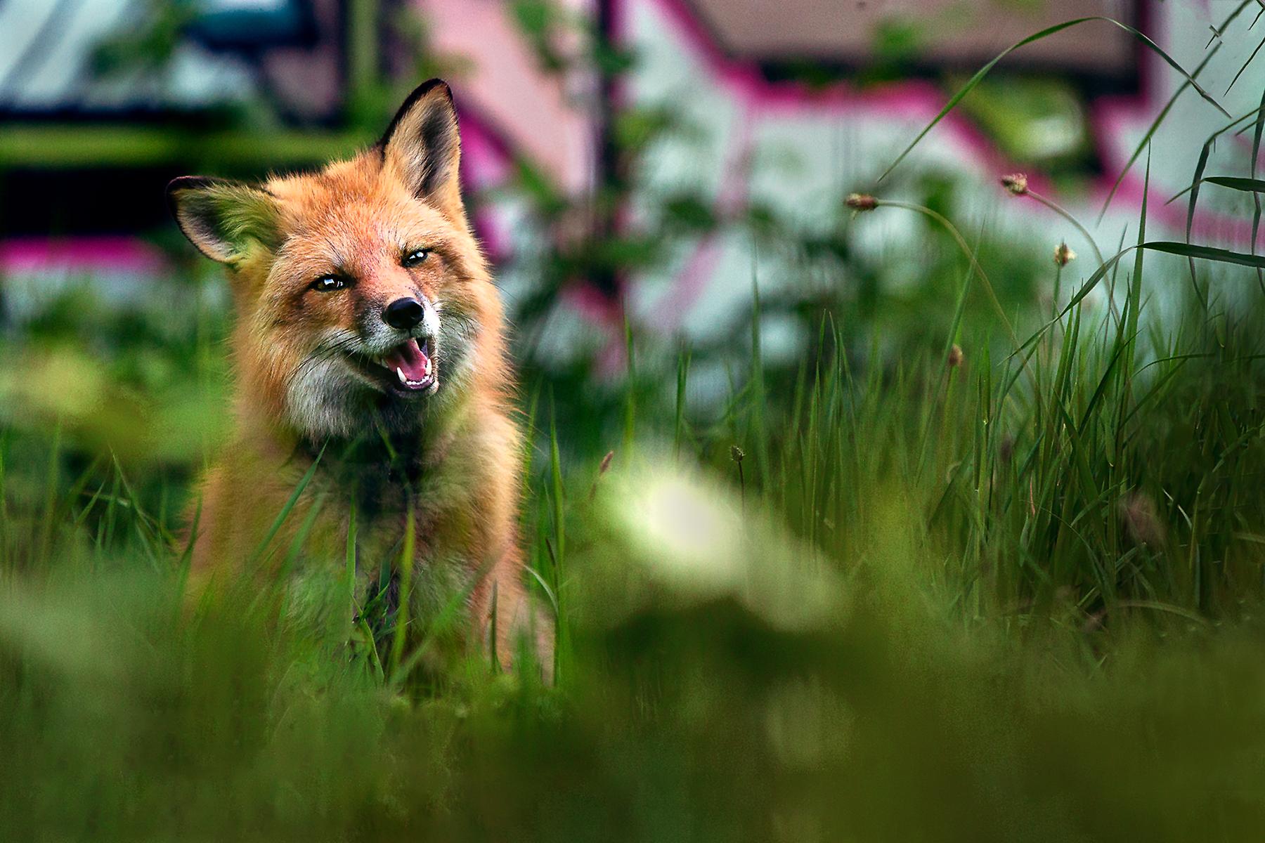 | Hundefotografin | Zetel | Friesland | Fotografin