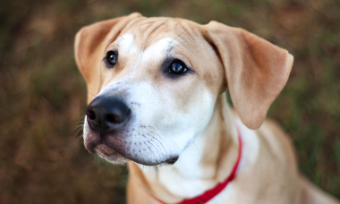 Scooby | Fotograf in Zetel | Hundefotografin