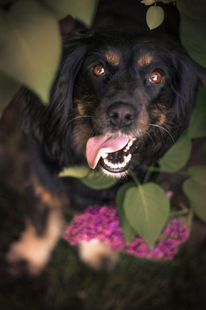 Skadi | Hundefotografin | Zetel | Friesland | Fotografin