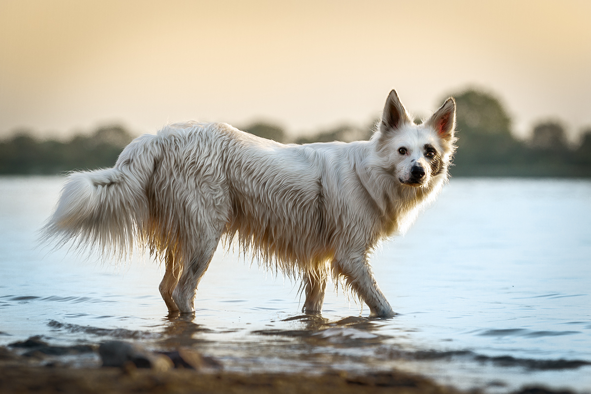 Bim | hundefotografie in Wilhelmshaven, zetel, friesland und Umgebung | Fotografin paw-prints.de