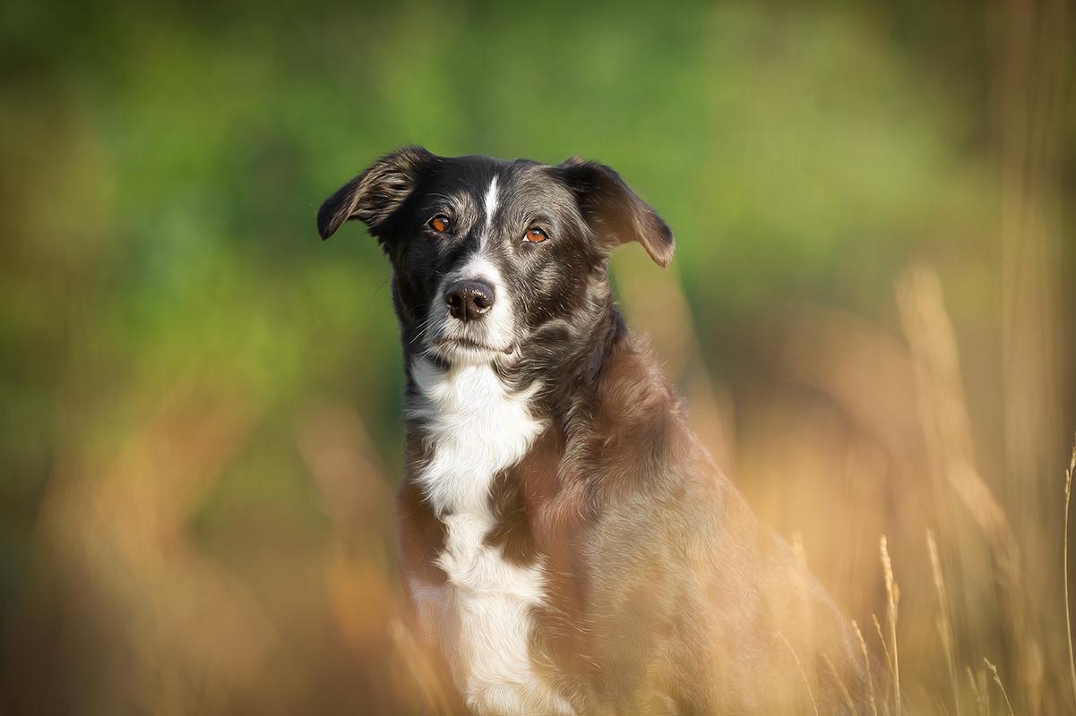 emma | hundefotografie in Wilhelmshaven, zetel, friesland und Umgebung | Fotografin paw-prints.de