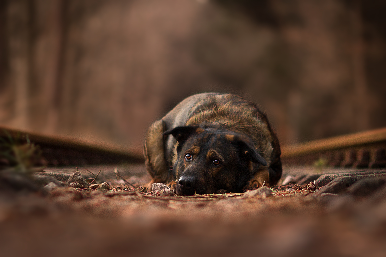 Inuki | Was muss mein Hund für ein Fotoshooting alles können? | paw-prints fotografie | Zetel, Friesland und Umzu