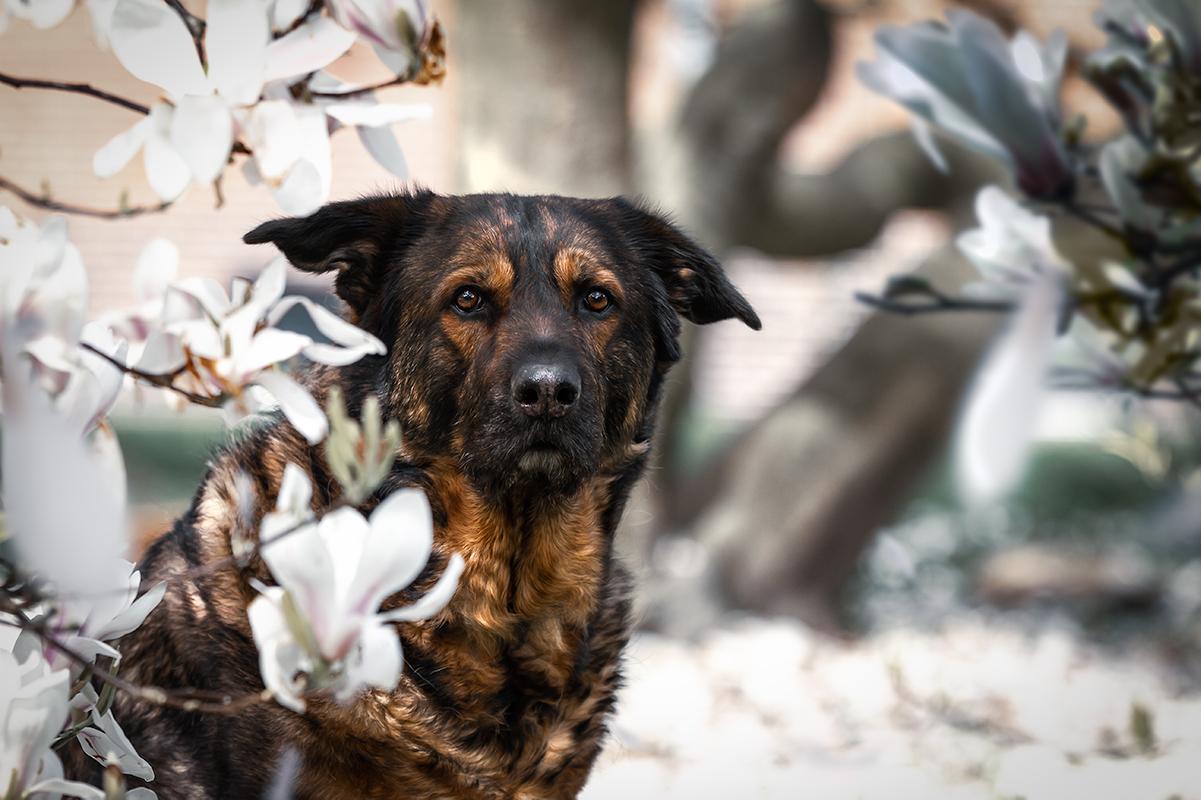 magnolie | hundefotografie in Wilhelmshaven, zetel, friesland und Umgebung | Fotografin paw-prints.de