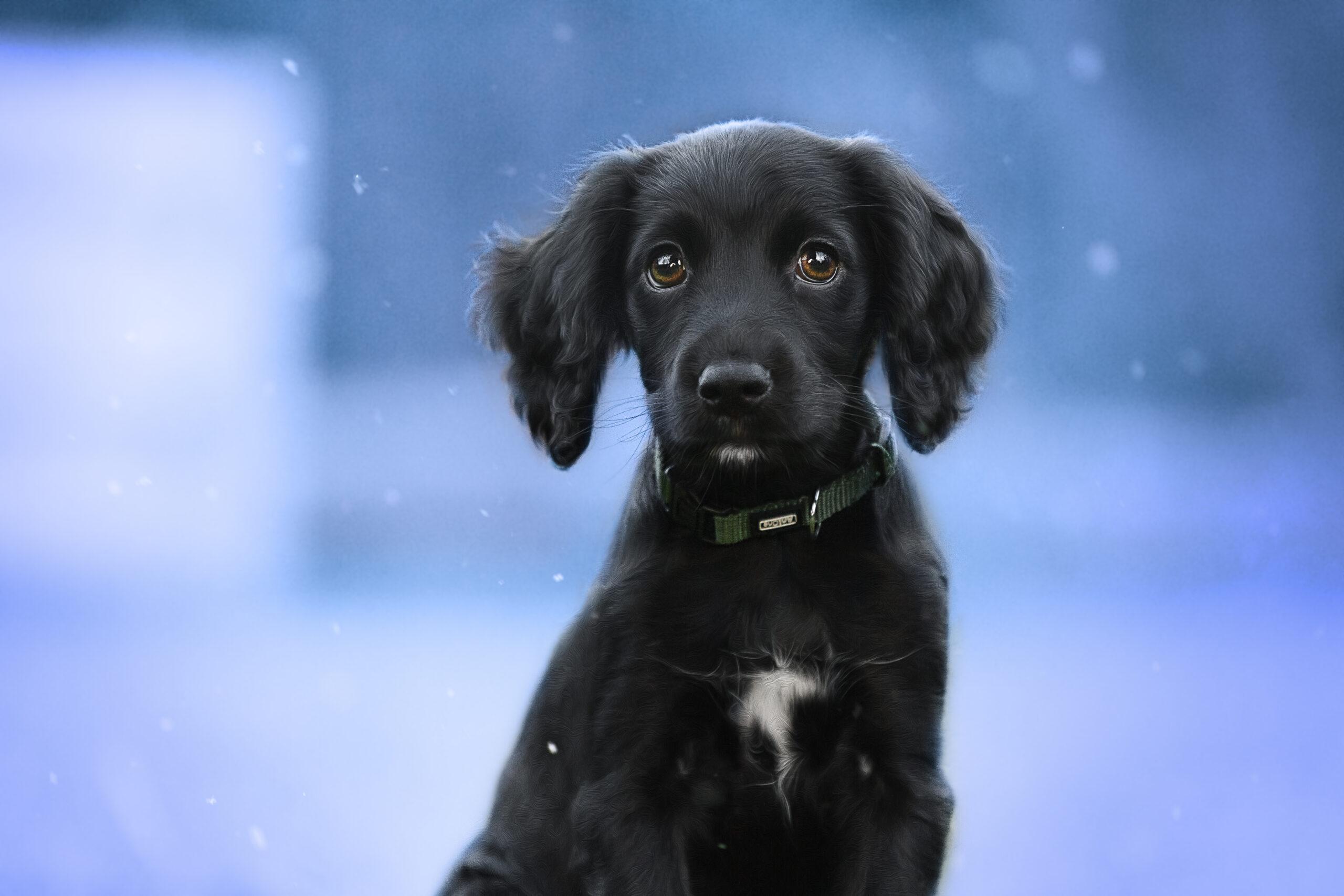 Eve | Hundefotografin | Zetel | Friesland | Fotografin